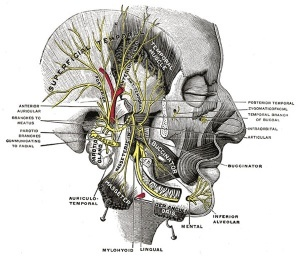 Migraine Headache Diagram