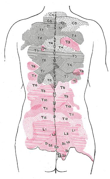 Medial Cluneal Nerves