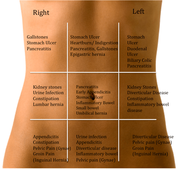 Anatomy right side abdomen