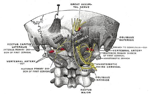 Occipital Neuralgia Colorado Pain Denver Golden