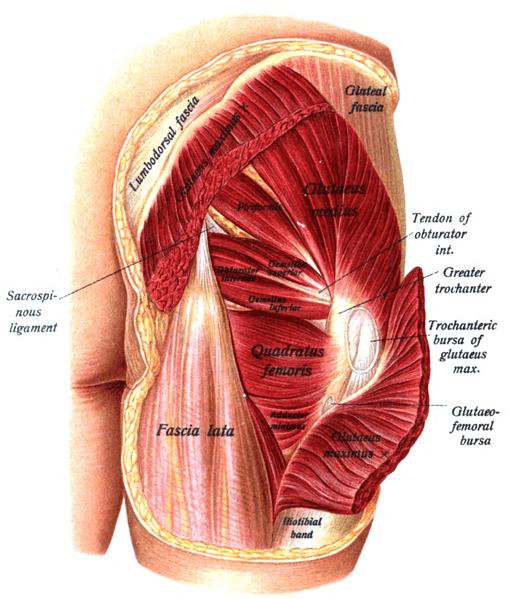 piriformis syndrome | colorado pain - denver, golden, Human body