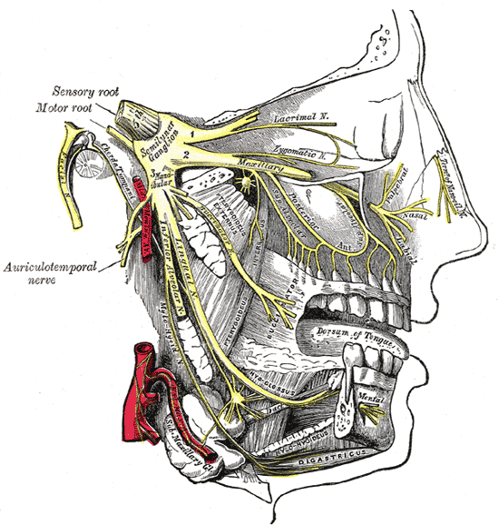 Face Diagram