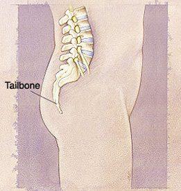 Human Tailbone
