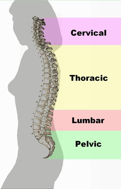 Spinal Column - Adhesiolysis