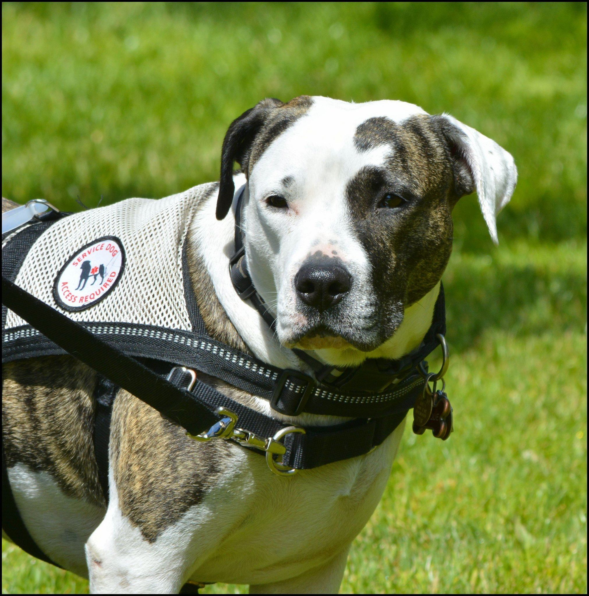 disease sniffing dogs
